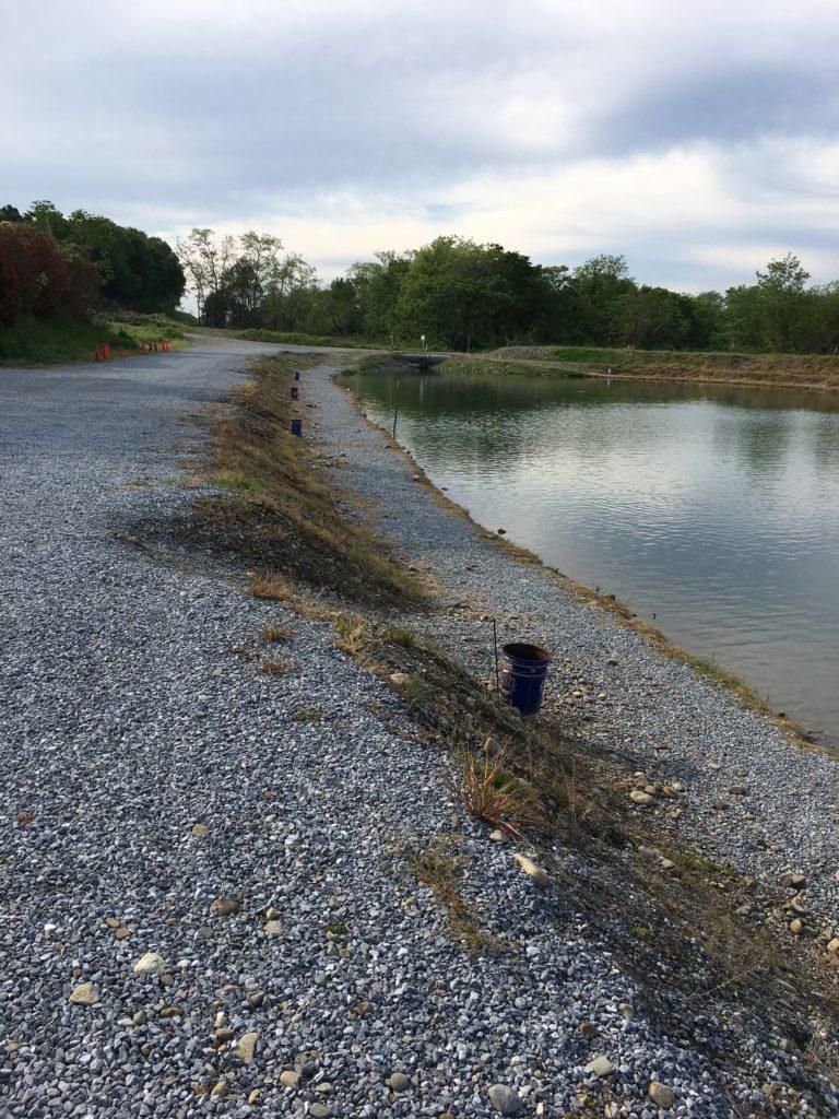 なら山沼漁場ポンド種類
