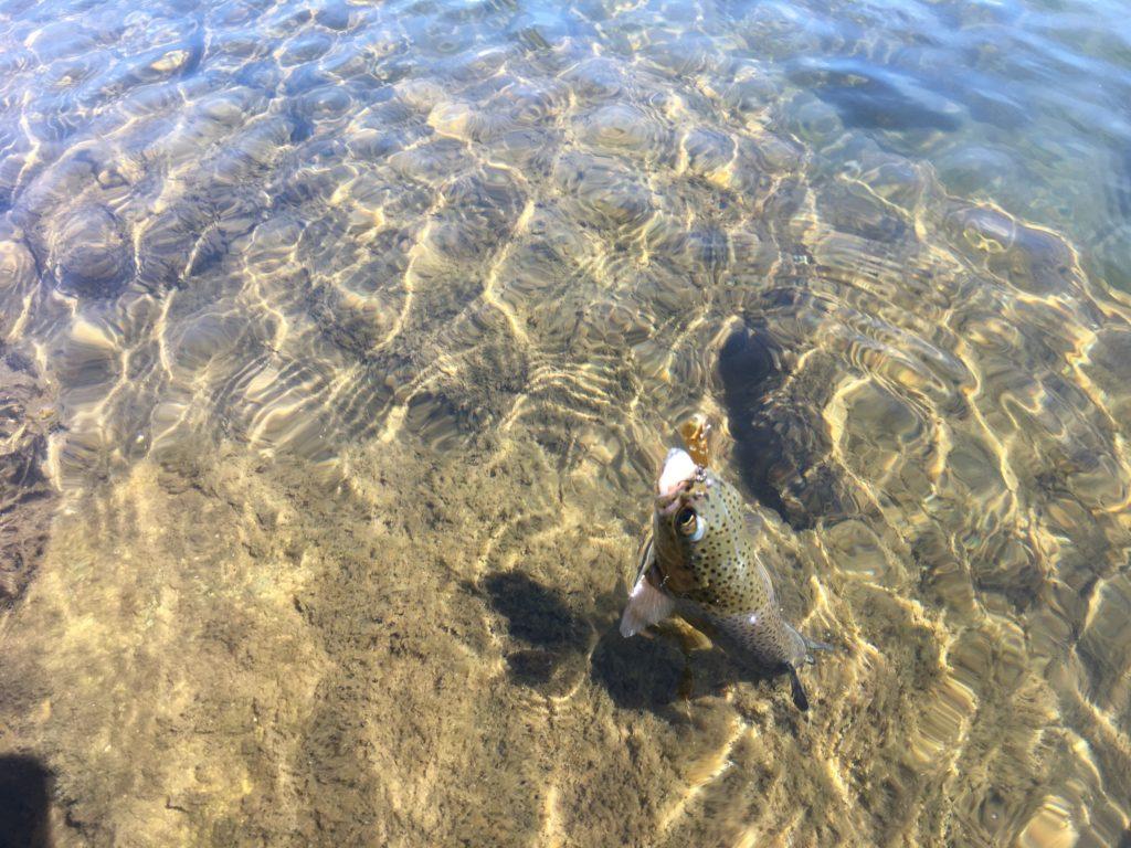片品川国際マス釣場 アクセス 大物レギュレーション 駐車場 スプーン 縦釣り B-Vibe ネオスタイル