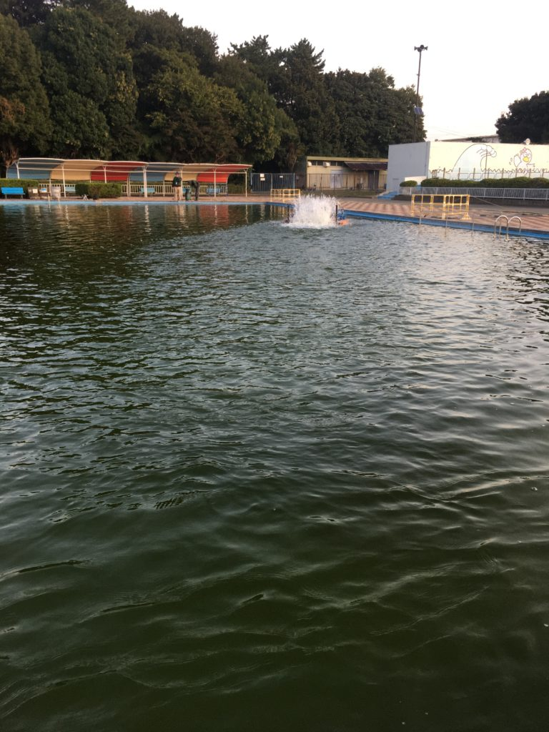 さいたま水上公園 プールフィッシング アクセス レギュレーション 料金 持ち帰り 大物 色物 フェザー ファミリー 女性 初心者 トイレ