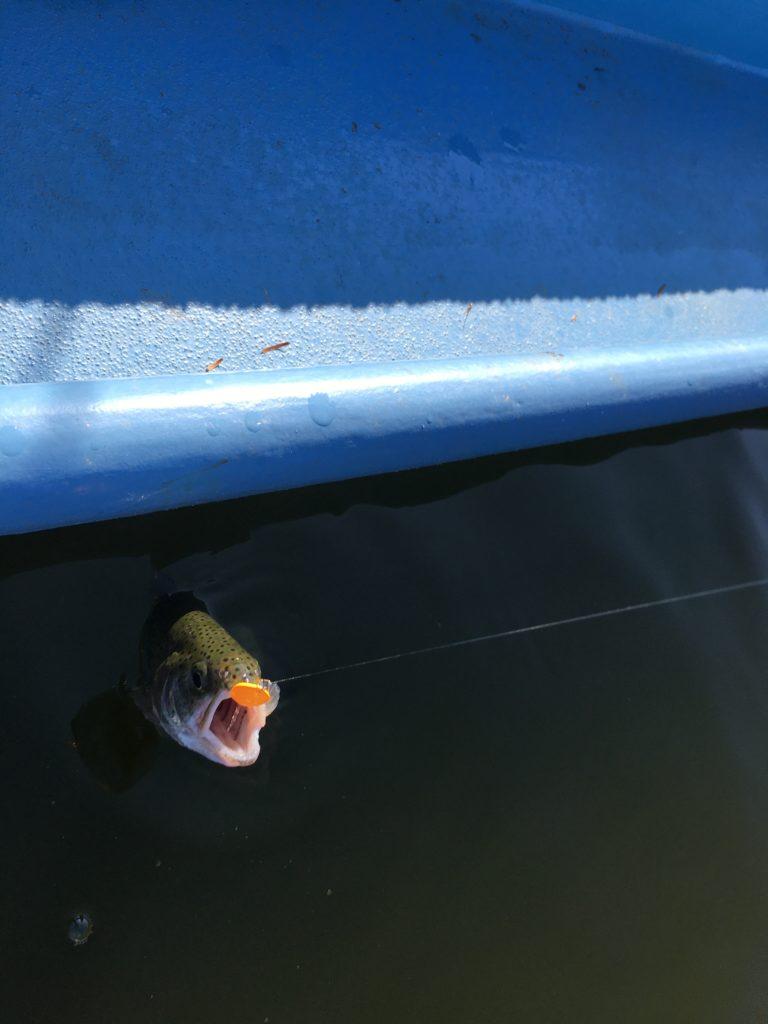 バベルWZ バベルエース 使い分け 巻きバベル ロブルアー 豆ルアー 縦釣り ネオスタイル フェザーフィッシング 川越水上公園さいたま水上公園 しもきん エキセントリック