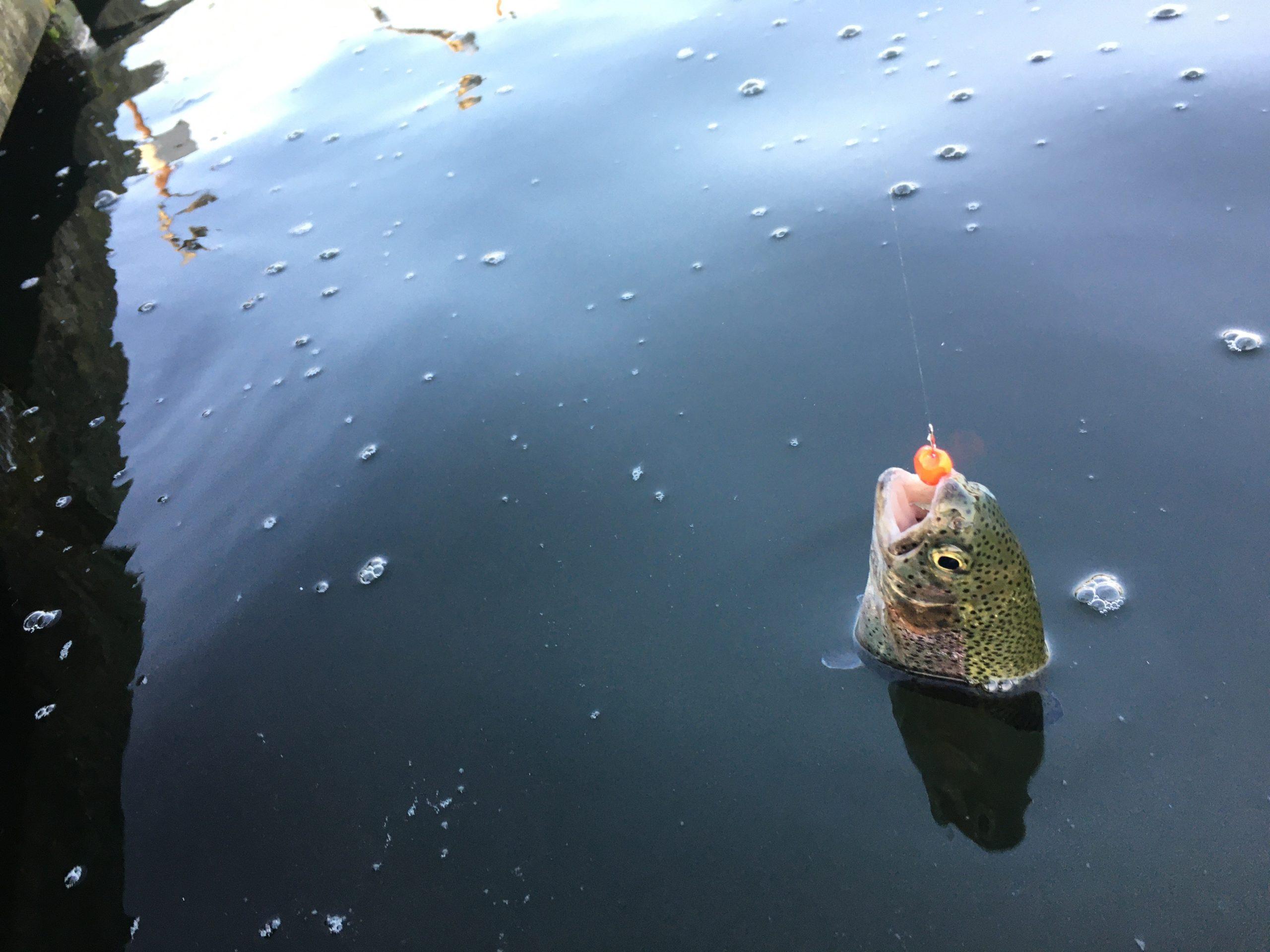 朝霞ガーデン 色物 防寒対策 マニフェス レギュレーション 管釣りマニア 縦釣り ネオスタイル ブング インバイト バチプロ ルビアス バリスティックアーマードF ナイロンライン