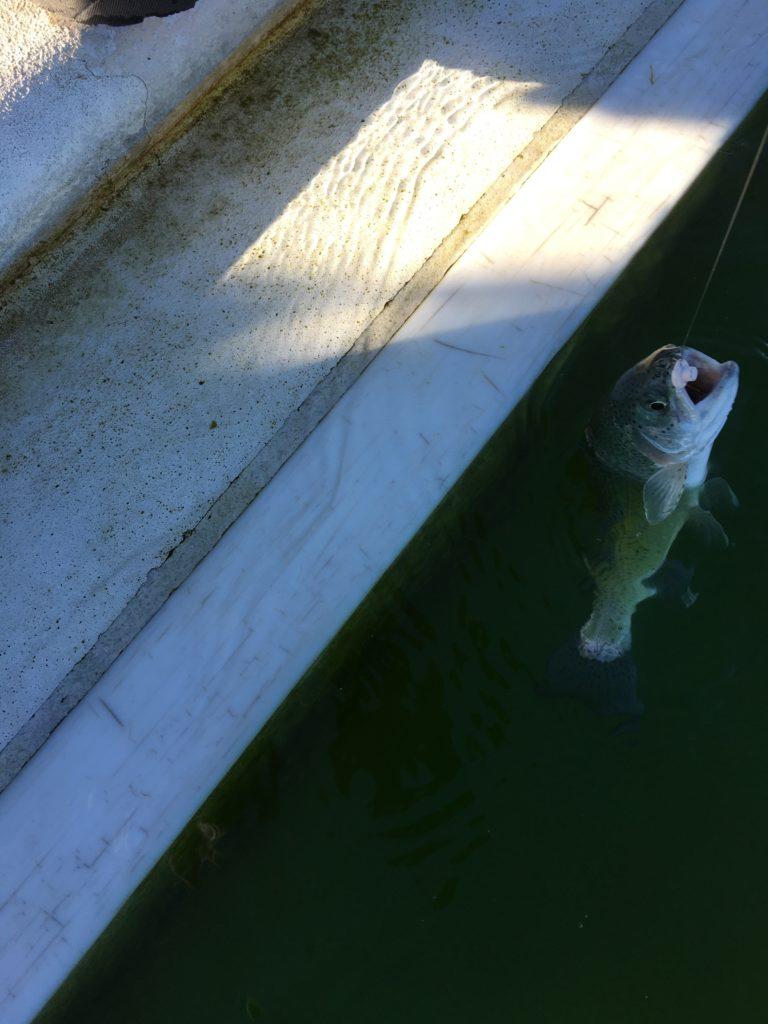 川越水上公園 釣り初め 2021年 ブング ティモン バベルエース さいたま水上公園 はなさき水上公園 INVITE ネオスタイル ロデオクラフト マニフェス