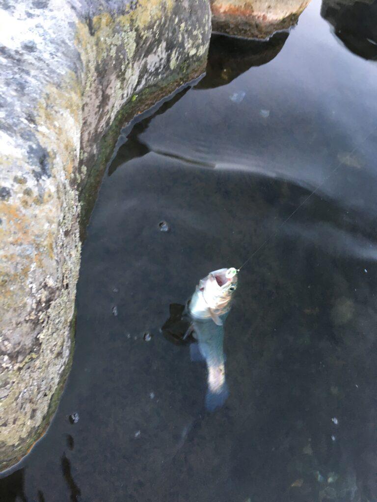 朝霞ガーデン 貧乏釣部 縦釣り ネオスタイル しもきん グリーン レギュレーション 管釣り東大 ロブルアー バベルエース インバイト ミノー クランク スプーン 初心者 管釣りってなんだ