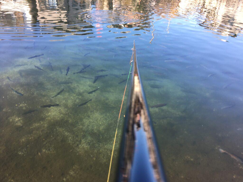 朝霞ガーデン 管理釣り場 貧乏釣り部 しもきん グリーン ユッケ ポテポテ 管釣り東大 大物 テンカラ ネオスタイル ロデオクラフト バベル ロブルアー 縦釣り クランク