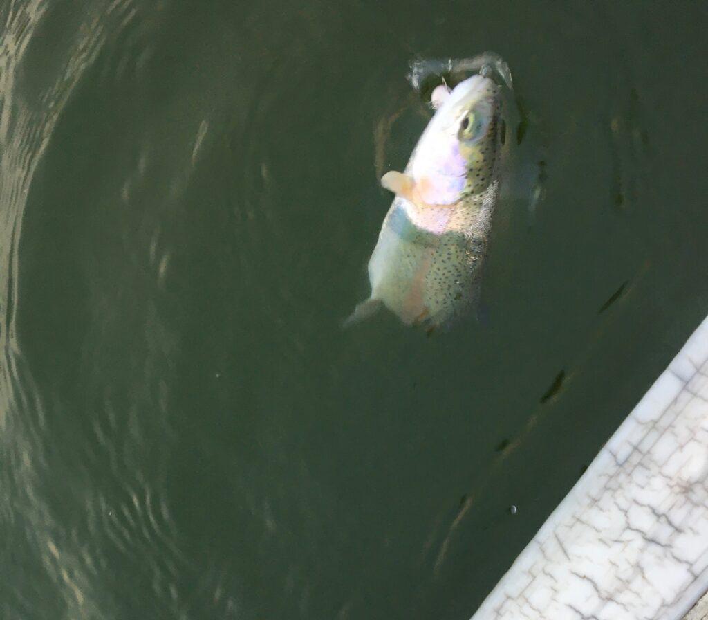 川越水上公園 フェザー 縦釣り 貧乏釣り部 バチプロ バベルエース バベルWZ さいたま水上公園 はなさき水上公園 プールフィッシング 初心者 ノア スプーン