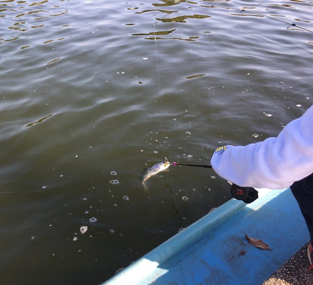 さいたま水上公園 はなさき水上公園 川越水上公園 初心者 甥っ子K ファミリー プールフィッシング 子供 スプーン フェザー 子供釣り 濁り 持ち帰り キャッチ&イート 捌き場
