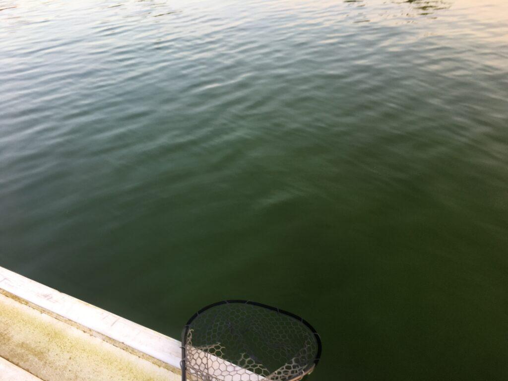 川越水上公園 プールフィッシング さいたま水上公園 しらこばと 2021 バベルエース バベルWZ しもきん ロブ ネオスタイル ロデオクラフト バチプロ 大物 春 ボトム 初心者 フェザー
