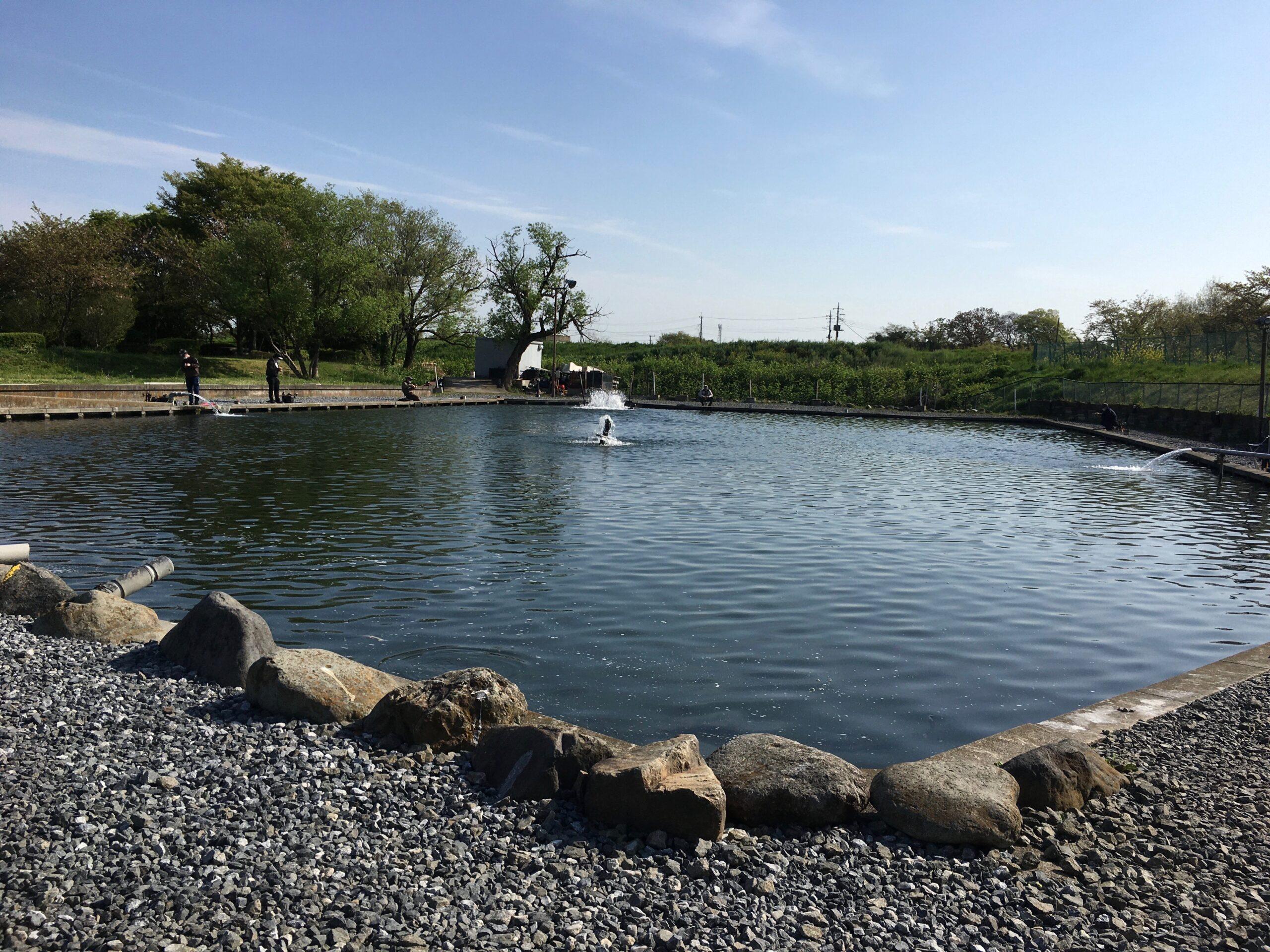 朝霞ガーデン大物サクラマス2号池ルアー池 貧乏釣り部 グリーン しもきん ユッケ ポテポテ 縦釣り インバイト ネオスタイル ロデオクラフト ダイソー スプーン 東大 難しい